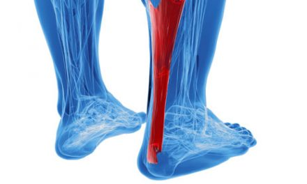 Research Sheds Light on Older Individuals' Susceptibility to Tendon Injuries